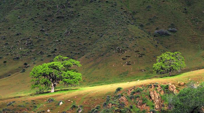 Tehachapi Hills - California - George Faerber