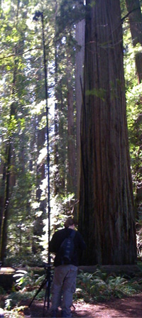 George at Jedediah Smith Redwoods State Park